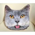 Подушка декоративная Худжанд рельефная с фотопечатью Шотландский  кот