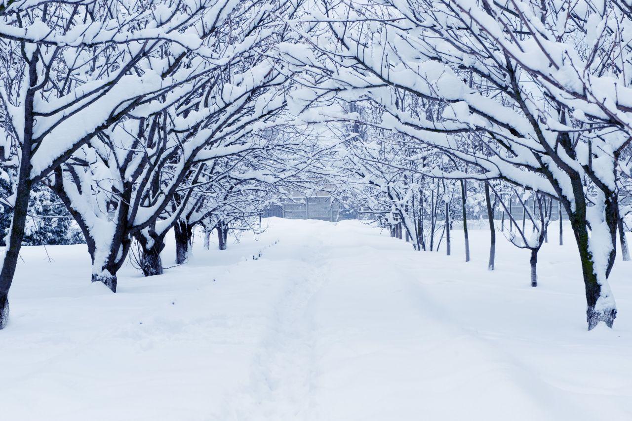 Фотосессия в снежную погоду